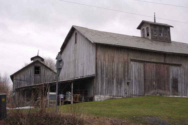 Cows and barn photo 1
