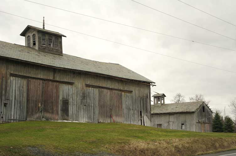 Cows and barn photo 2